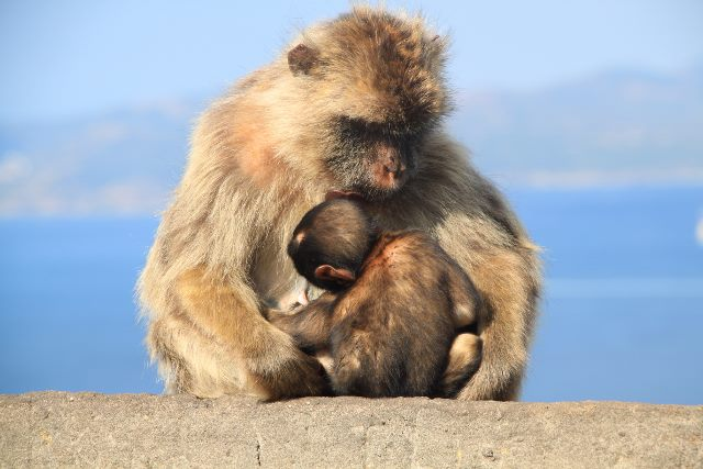 image of Gibraltar's permanent residents